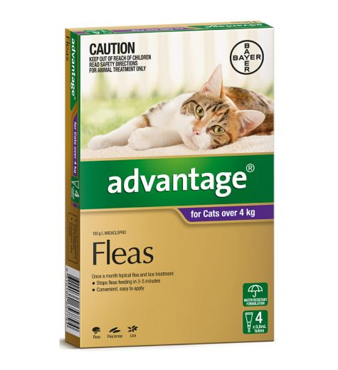 Advantage For Large Cats (over 4kg) 4 Pack