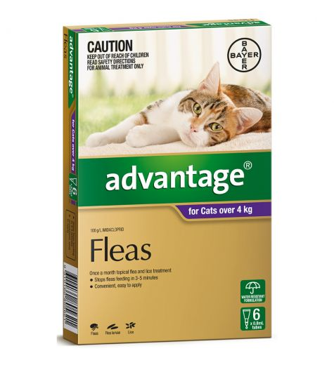 Advantage For Large Cats (over 4kg) 6 Pack
